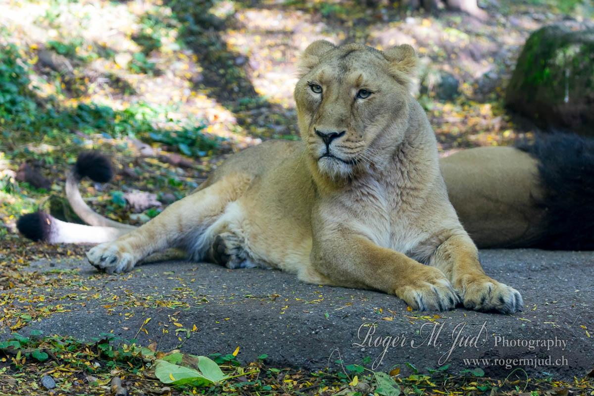 Wieviel Verdient Ein Tierpfleger Im Zoo